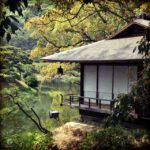 tea_photos_6
